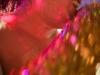 blog-photos-20100403-25